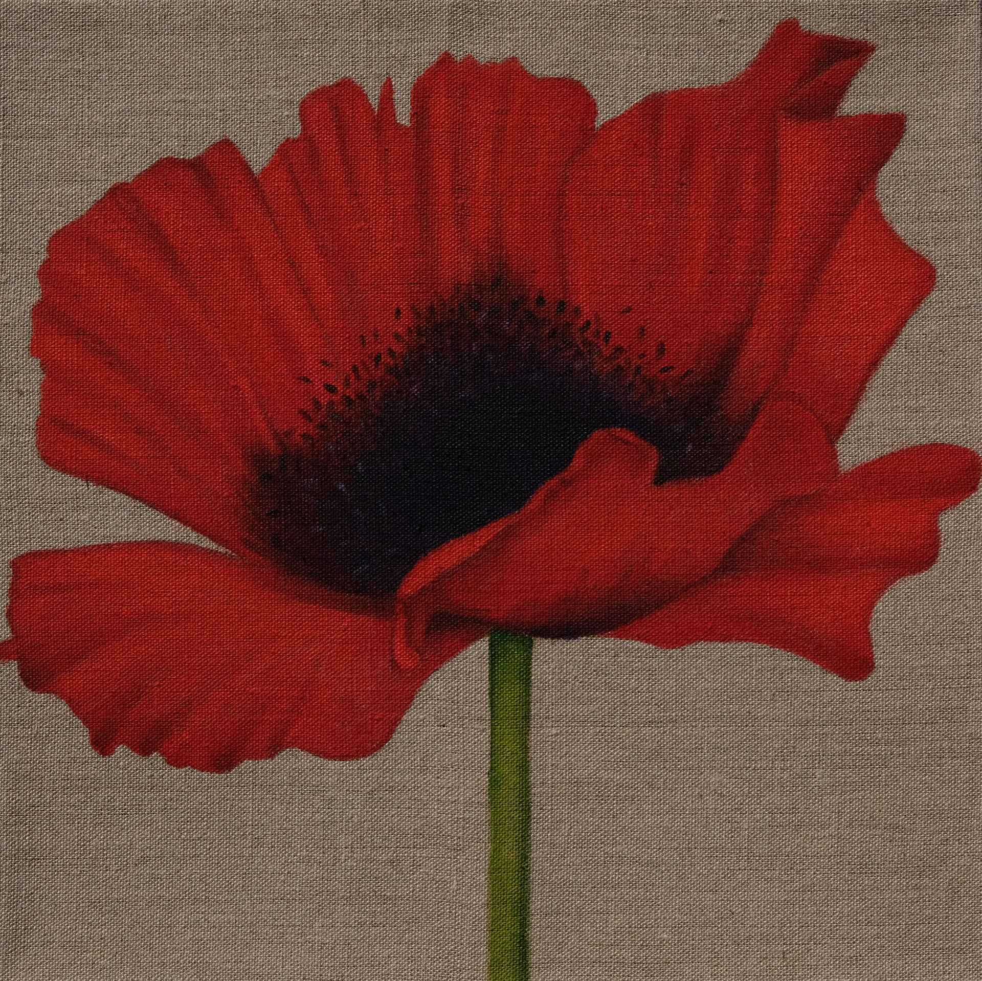 Red Poppy On Linen 300 X 300 Jaci Hogan Art