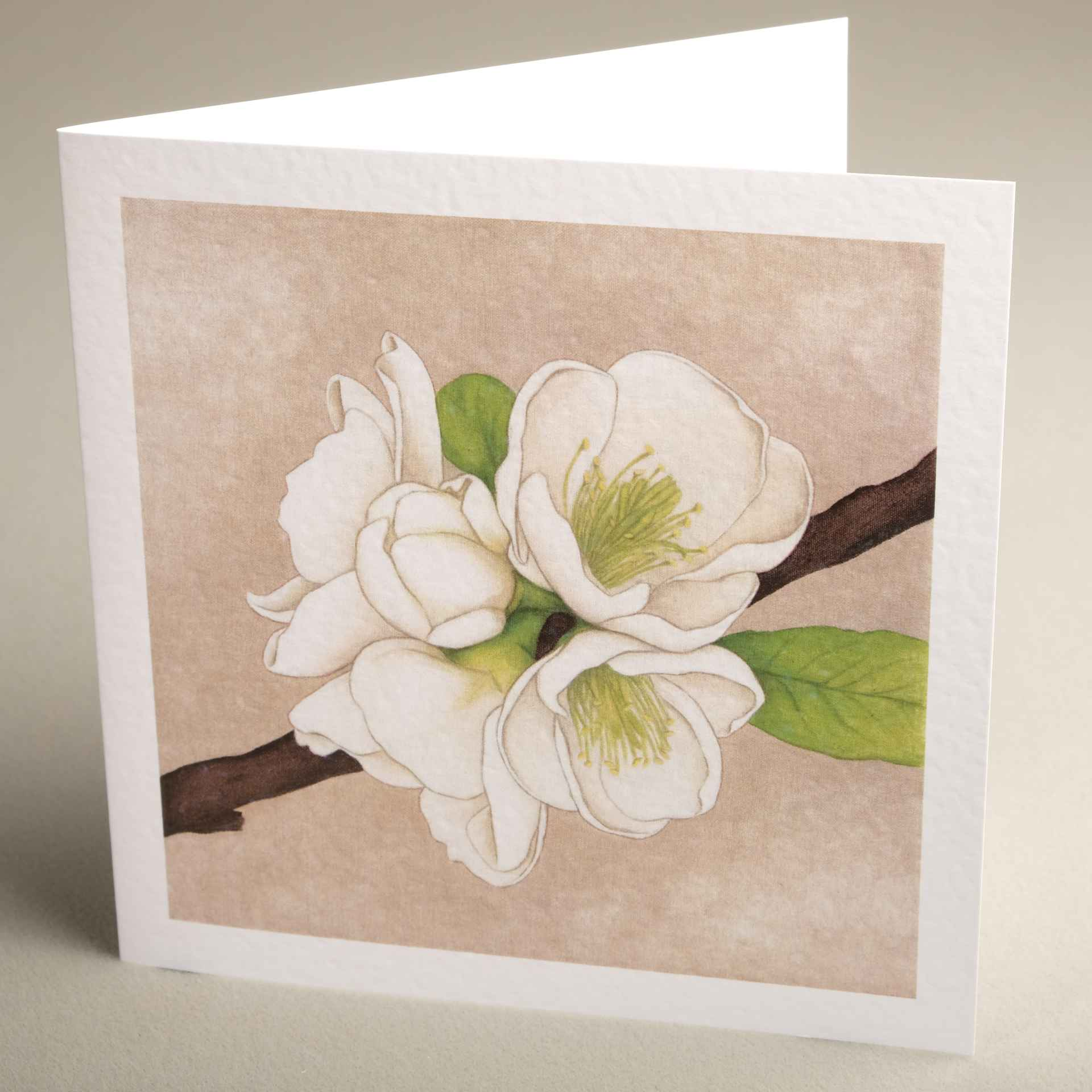 Floral greetings cards from jaci hogan art flower design greetings greetings cards apple blossom textured 150x150 m4hsunfo