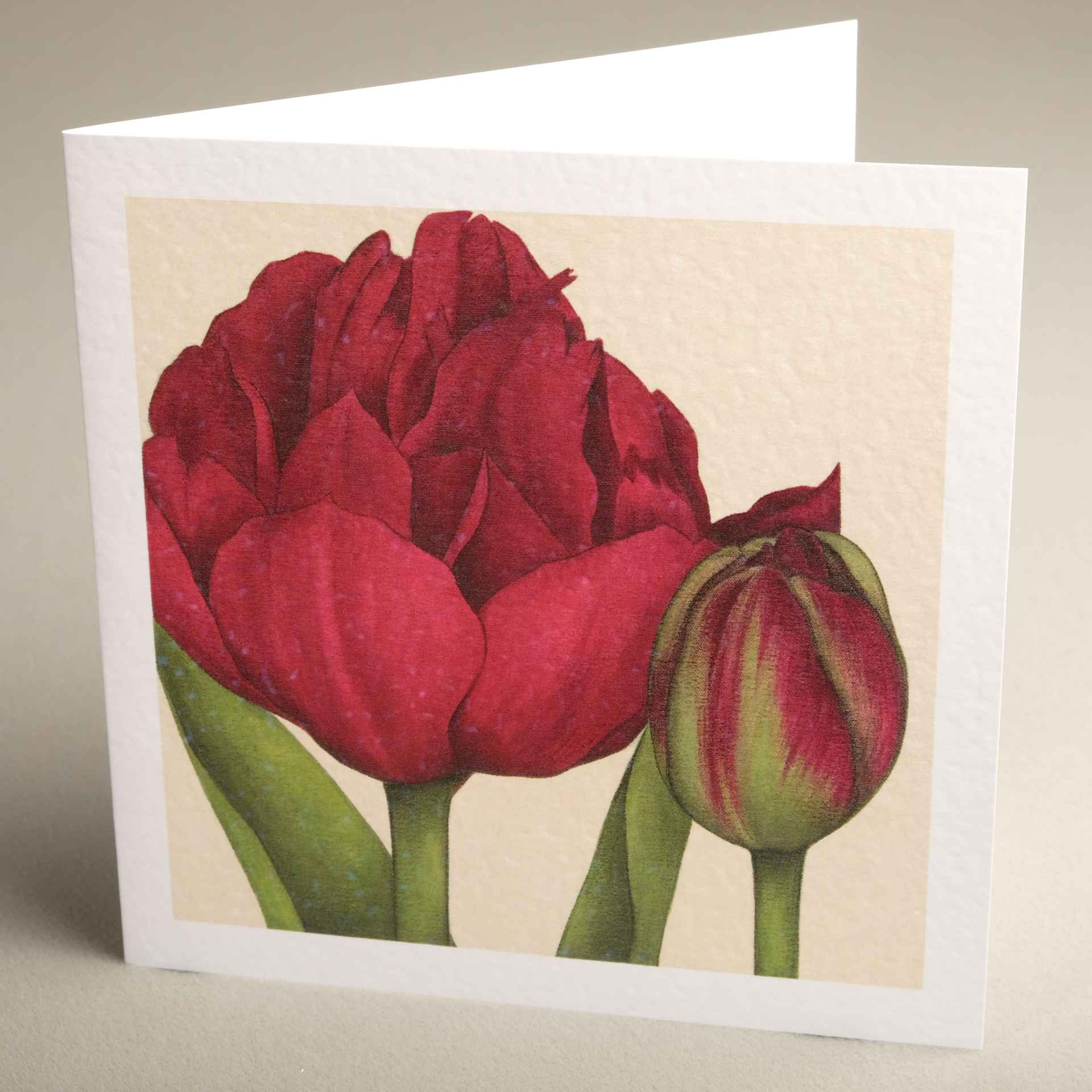 Floral greetings cards from jaci hogan art flower design greetings greetings cards burgundy uncle tom tulip textured 150x150 m4hsunfo
