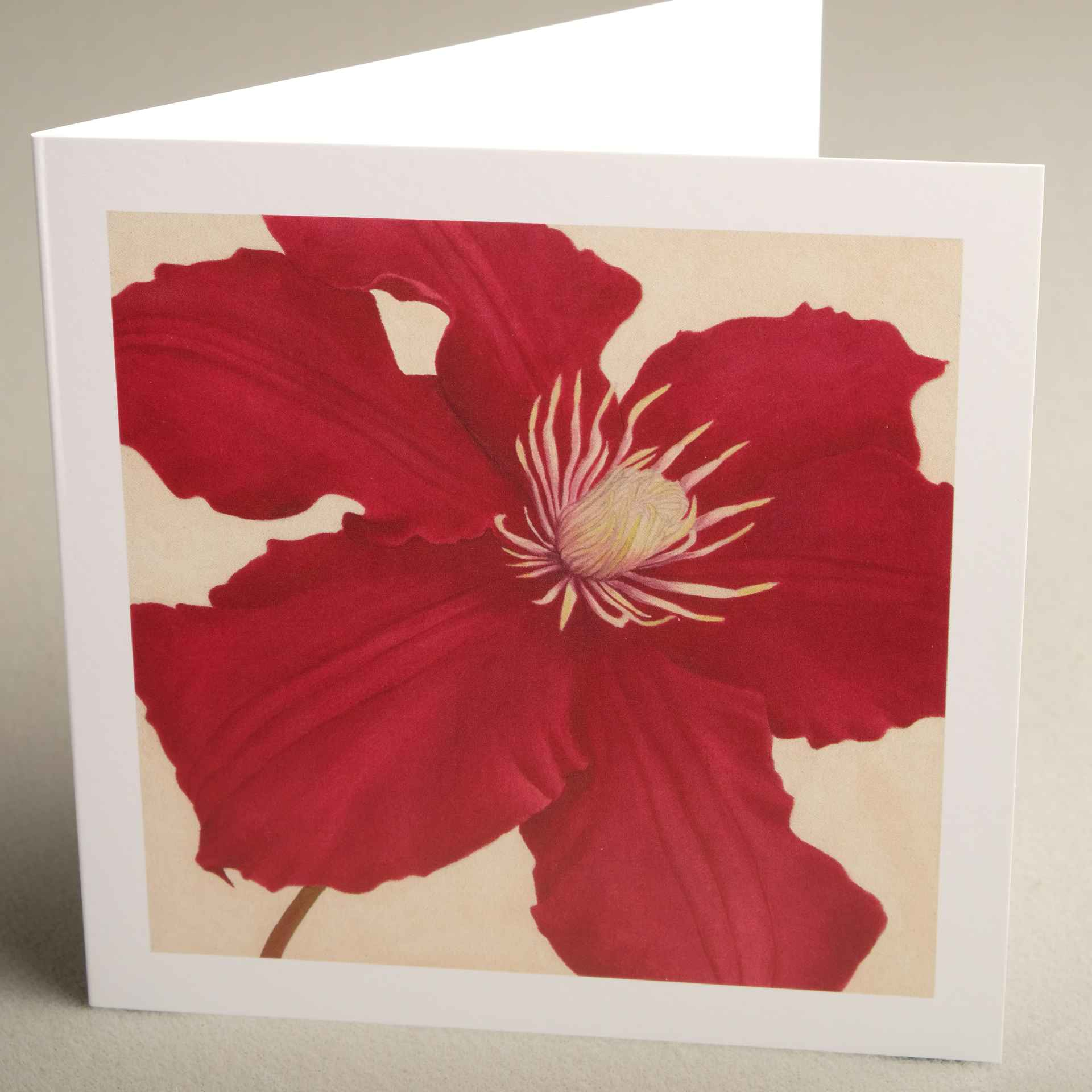 Floral greetings cards from jaci hogan art flower design greetings greetings cards clematis rosemoor smooth m4hsunfo