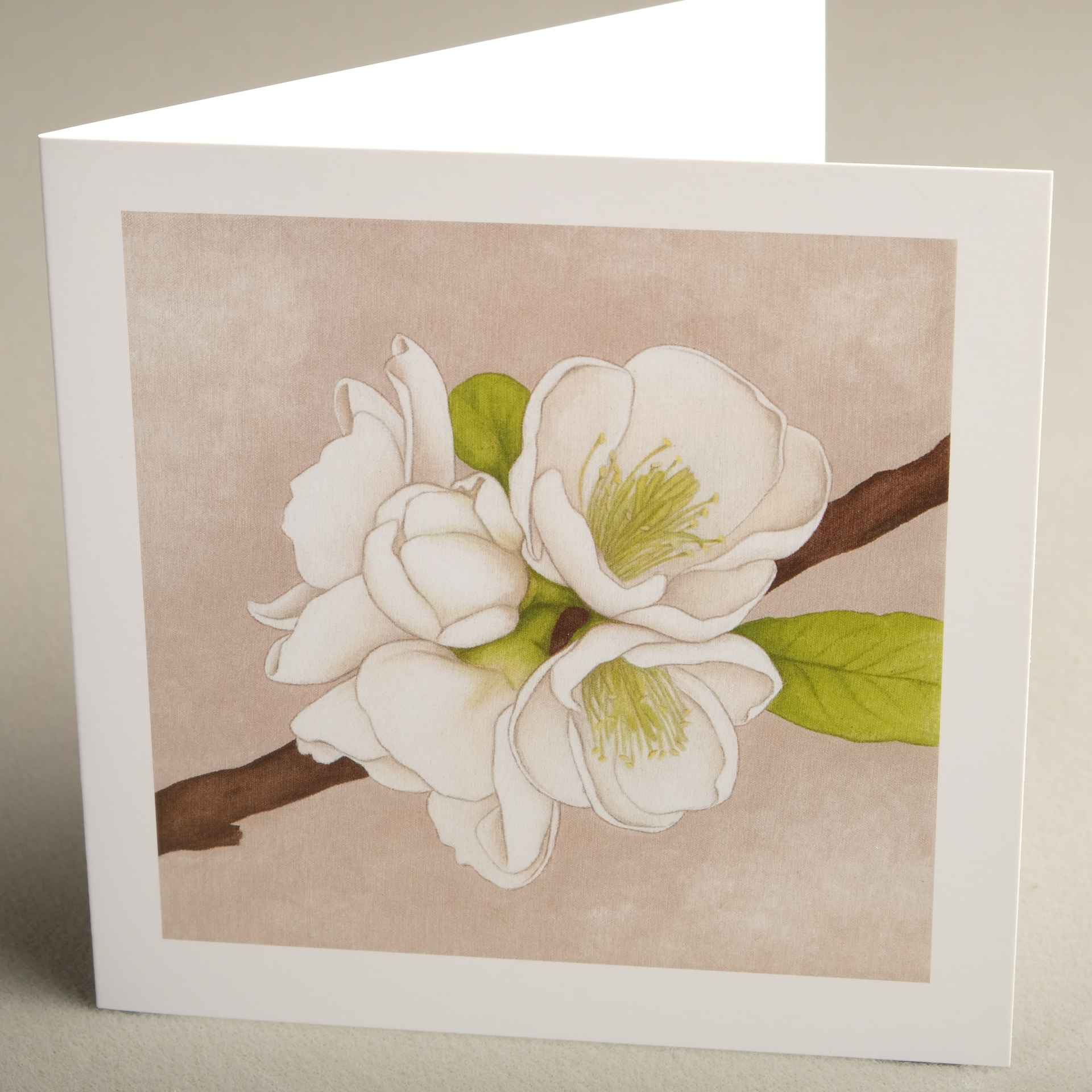 Floral Greetings Cards From Jaci Hogan Art Flower Design Greetings