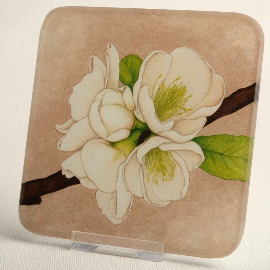 Apple Blossom - greetings-cards