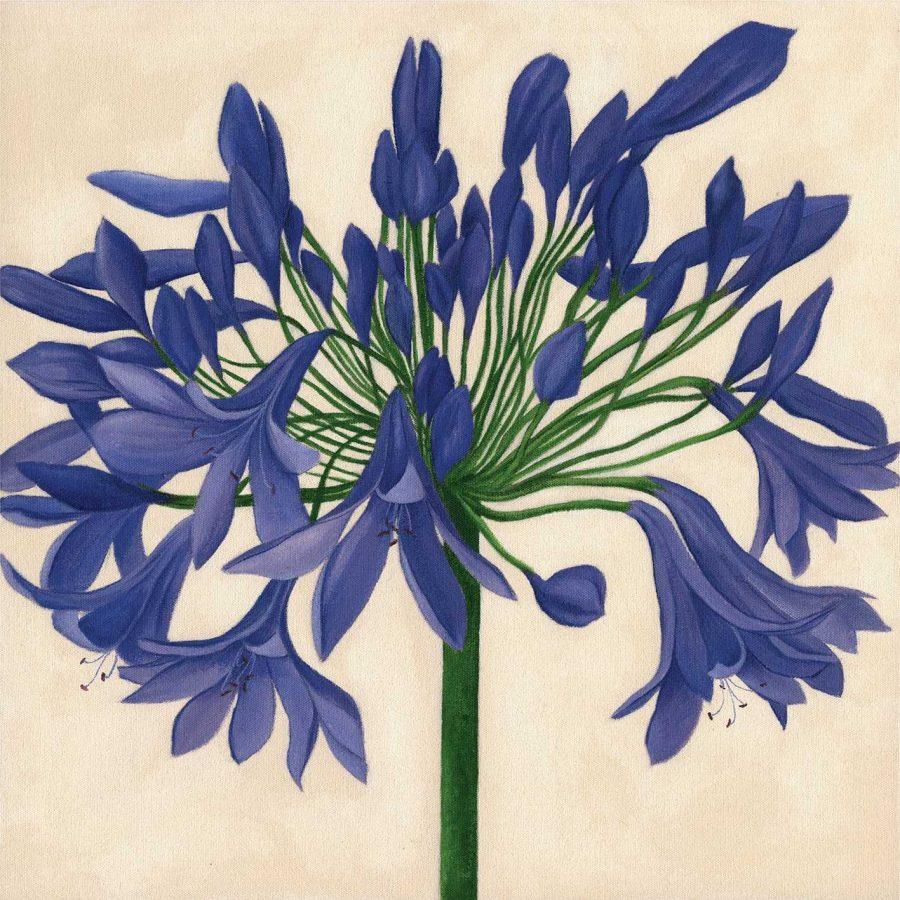 Dark Blue Agapanthus