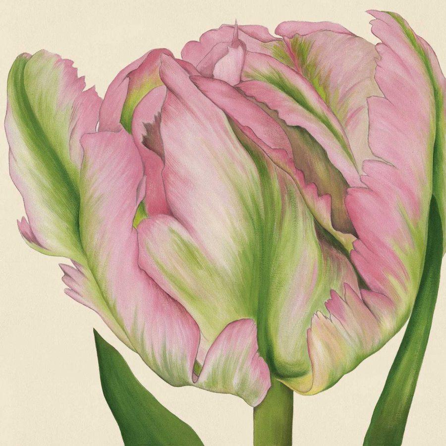 Greenwave Tulip