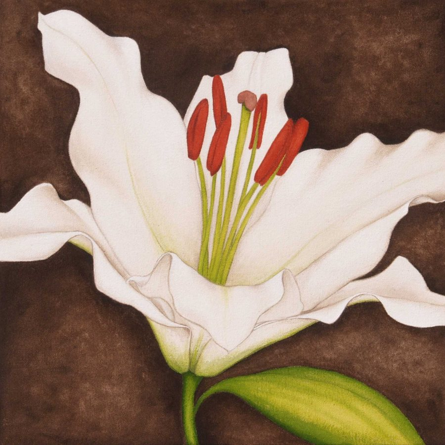 White Lily on Brown